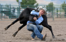 Young Cowboy Steer Wrestling 496879610 3868x2578 300x200